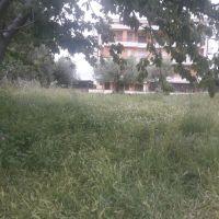 IMG_0857