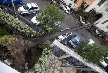 """Alberi caduti per il maltempo, Coldiretti: """"Necessaria manutenzione del verde urbano"""""""
