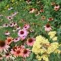 gardenborder