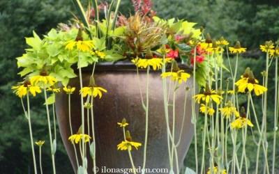 Five Principle Ideas To Design A Beautiful Garden