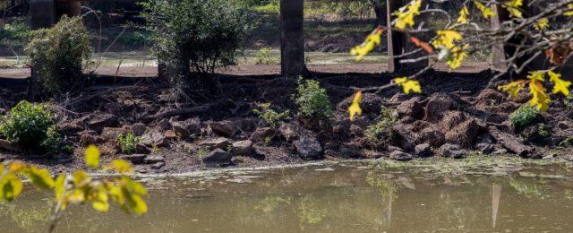 Bayou Meto WMA habitat damage