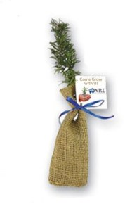 Pine Seedling in Burlap Bag #3GL3