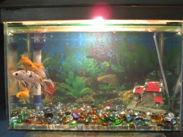 Fish Tanks ? Buy Fish Tanks, Price , Photo Fish Tanks, from Fish