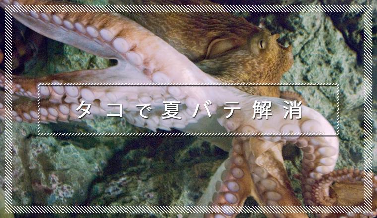 octopus01