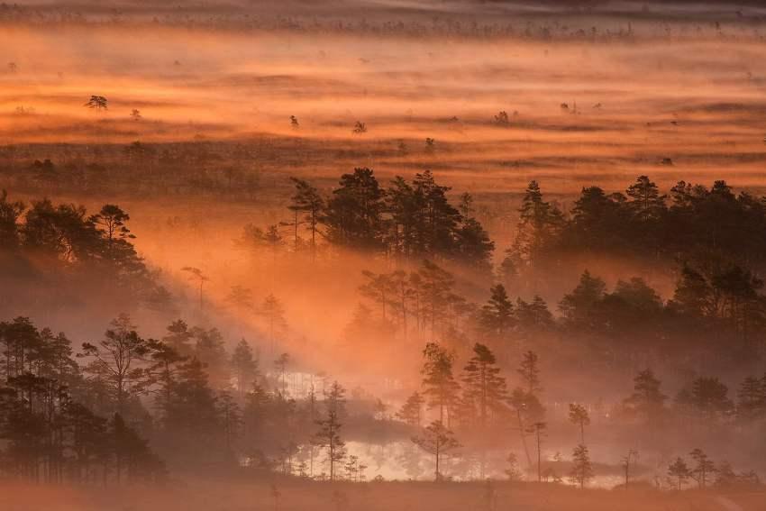 Morning in Tolkuse bog, Luitemaa Nature Conservation Area, Pärnu County, Estonia. — Photo by Märt Kose