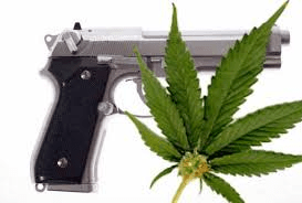 gun and marijuana