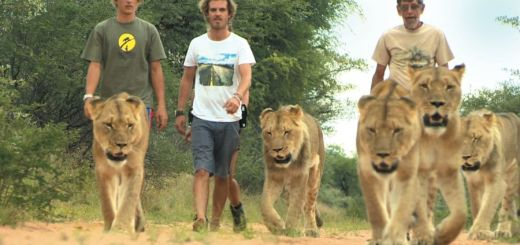 Harnas Wildlife Rescue Camp