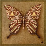 exchange_symbol_butterfly_4
