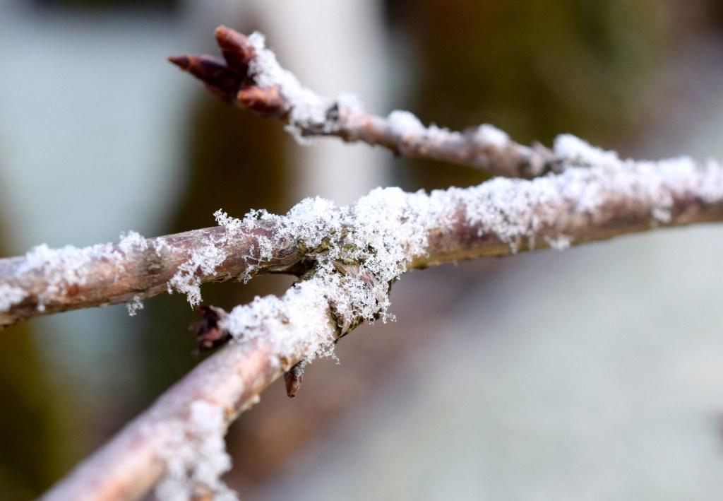 Fotografisch durch die Jahreszeiten WInter