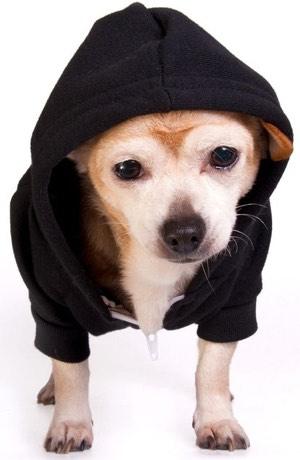 dog-hoodie