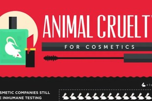 Animal Cruelty for Cosmetics