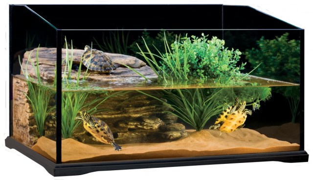 Turtle Tank   for the Well Being of Your Turtles   Info Turtle