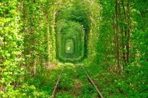 los_tuneles_arbol_mas_hermosos_del_mundo_956439923_1200x797