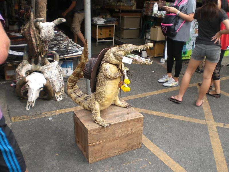krokodille, bangkok