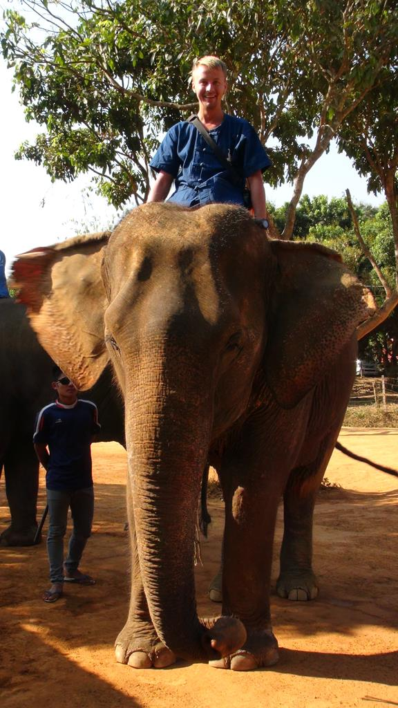 chiang mai, elefant reservat, thailand