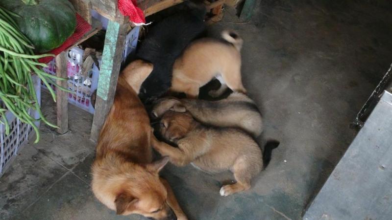 Hundene som vi boede sammen med.