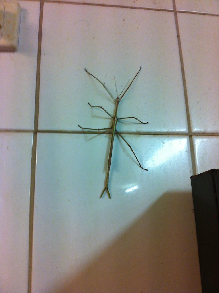En vandrende pind besøgte køkkenet en af dagene.