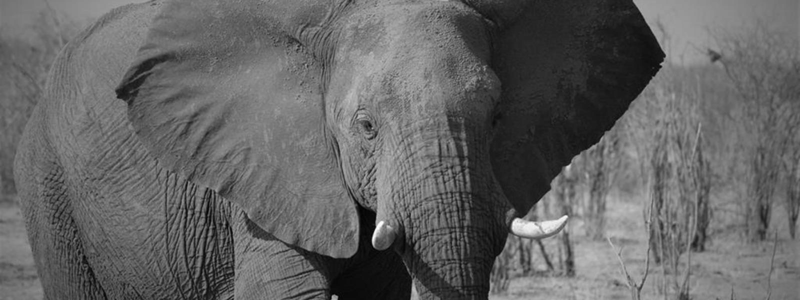 Botswana i Billeder