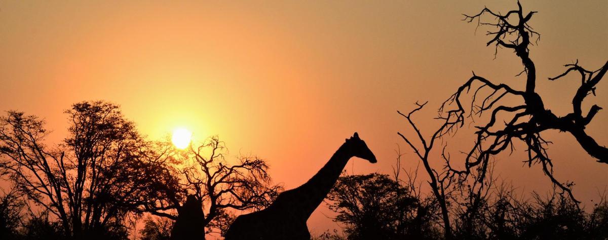 Botswana - Den ultimative safari oplevelse!