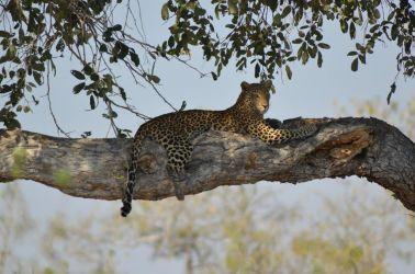 1. Chobe National Park (40)