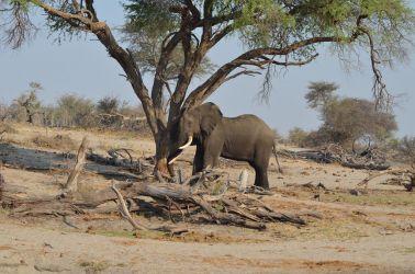 7. Makgagikgadi National Park 1 (112)
