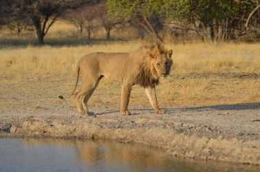 6. Central Kalahari Game Reserve (182) - Copy