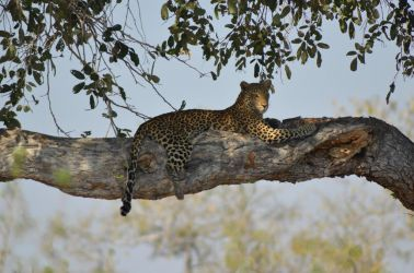 1. Chobe National Park (40)