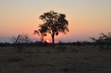 1. Chobe National Park 1 (62)