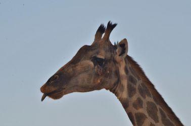 1. Chobe National Park 1 (30)