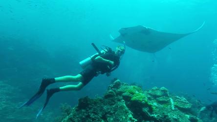 thailand, dykning, manta ray, hin muang, hin duang