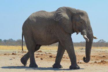 1. Chobe National Park (74)