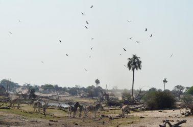 7. Makgagikgadi National Park 1 (80)