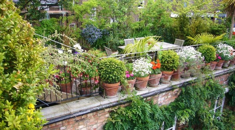 Idea #5 | Rooftop Farming Counters Air Pollution