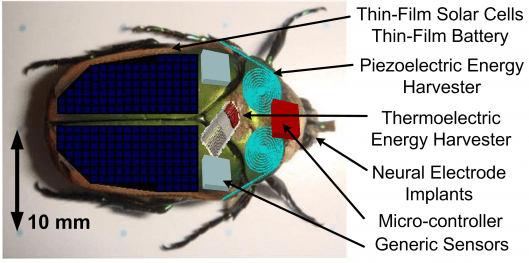 Harvesting energy from insects in quest to create tiny cyborg first responders
