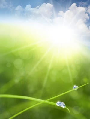 Photosynthesis Re-Wired: Chemists Use Nanowires to Power Photosynthesis-Like Process