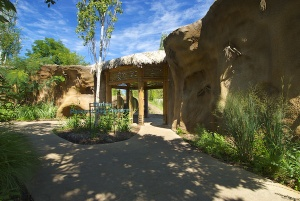 The approach to Purina Painted Dog Preserve takes visitors into an octagonal viewing hut immersing them in the midst of the exhibit with unobstructed views through floor-to-ceiling glass. Photo: Saint Louis Zoo.