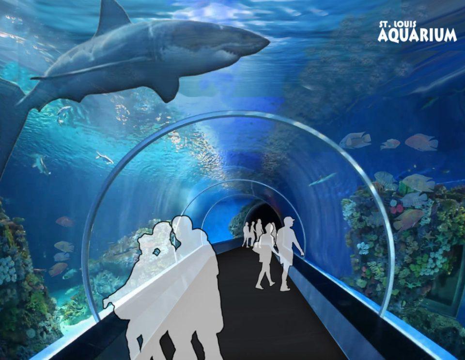 shark tube-3