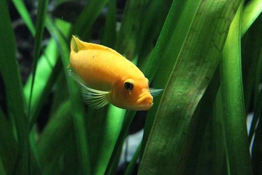fish-320914__340