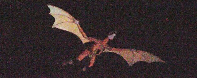 dragon-flies