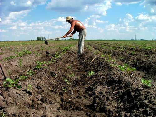 Uruguay Top Ten Ethical Destinations Man in Field
