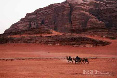 Camels in Wadi Rum