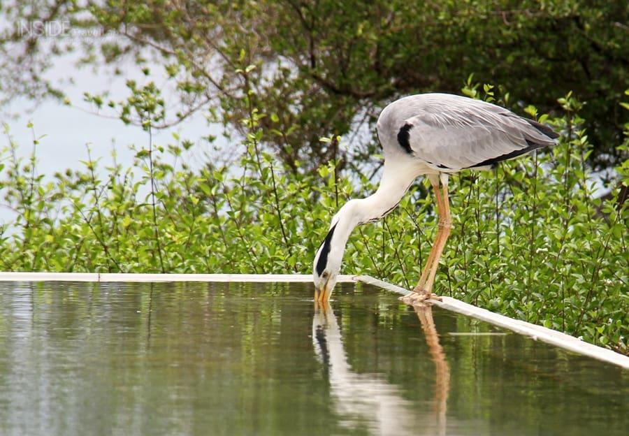 Maldives bird at spa