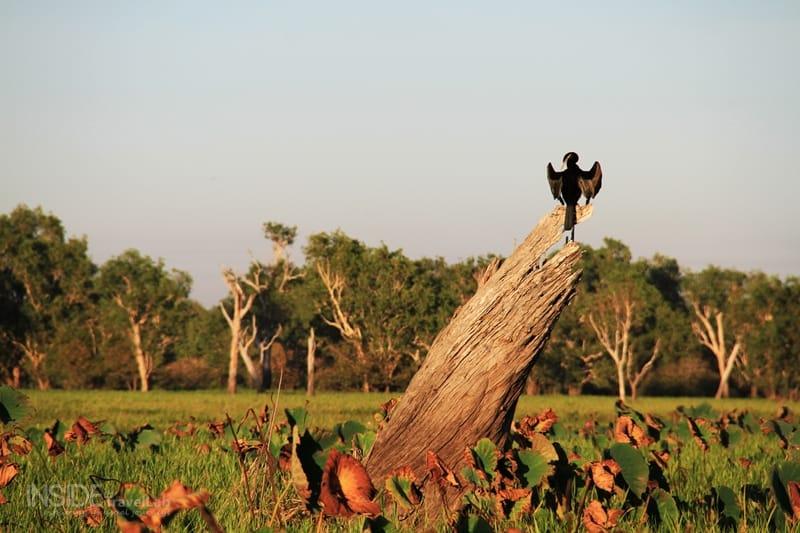 Kakadu Park Bird