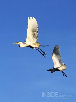 Kakadu Park Birds