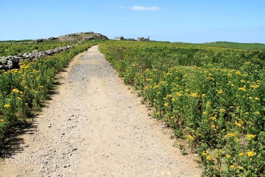 Coastal path in Pemrboke