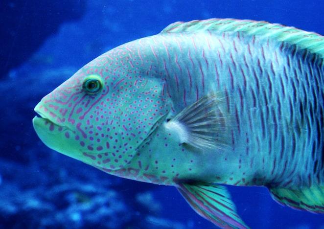 Fish, Okinawa
