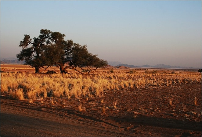 I'm in the middle of the Namib Desert, the oldest desert in the world. It is a desert racing against the sands of time.