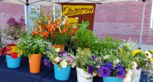 Stone Row Acres will be returning to this years farmers market with an array of flowers and herbs.