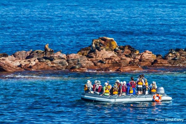 BAJA Sea Lions & Skiff-CR Un-Cruise Adventures & Peter West Carey