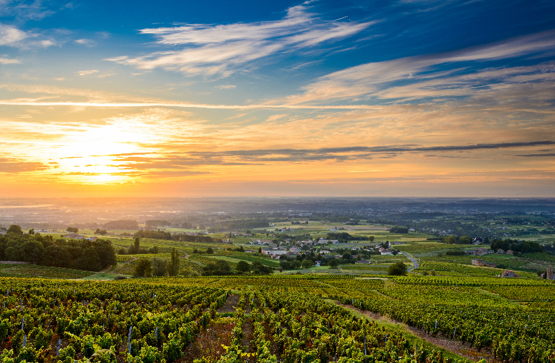 Beaujolais vineyard, Burgundy region